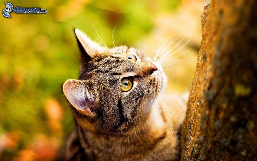 cat, branch