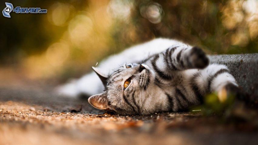 cat, sidewalk