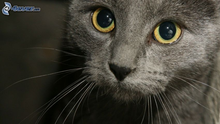 cat face, eyes, whiskers