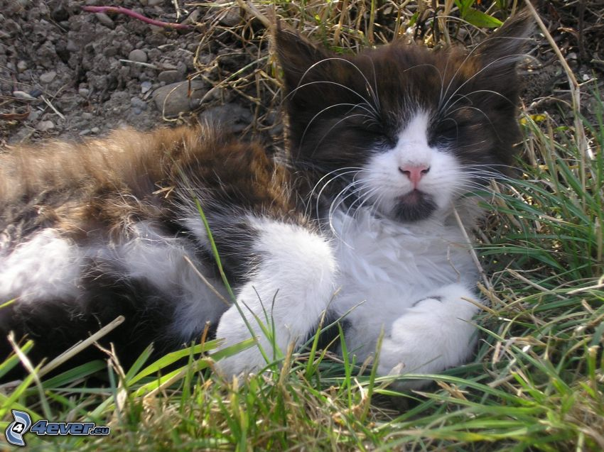 cat in the grass, gravel