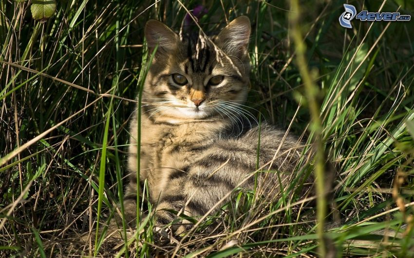 cat in the grass, relaxing