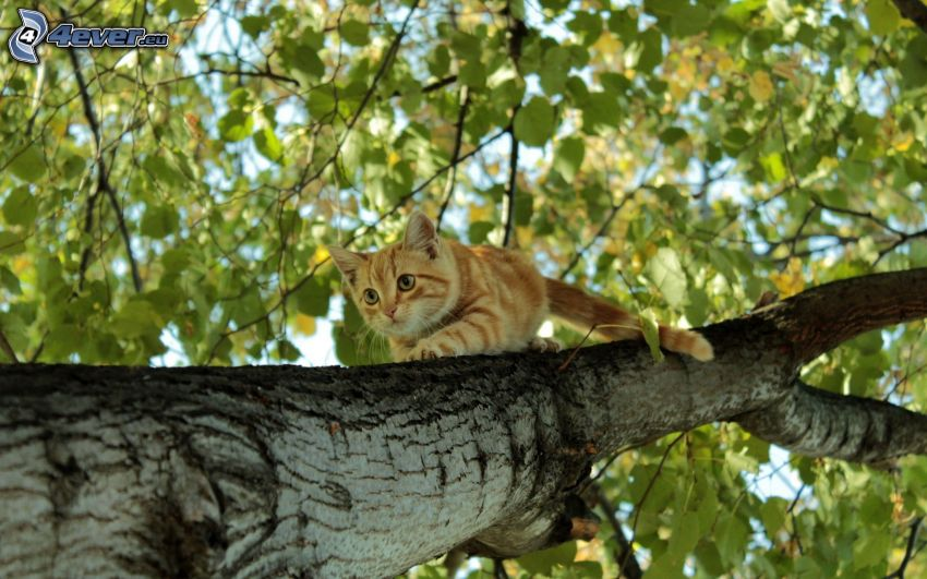 cat on a tree, leaves