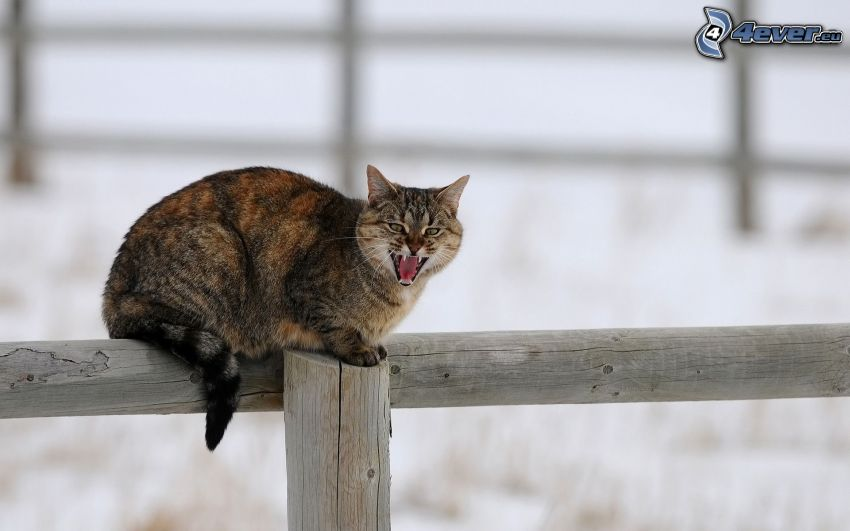 cat on fence, palings