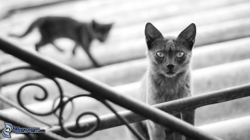 cats, stairs, railing, black and white photo