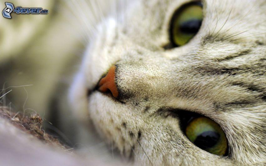 cat's look