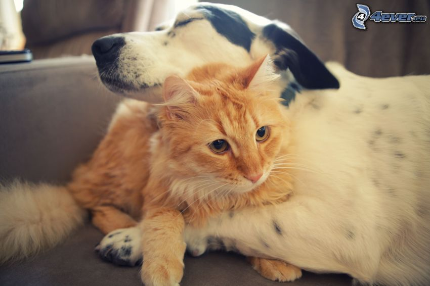 dog and cat, love