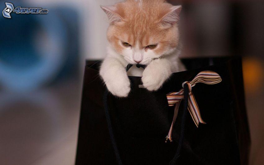 ginger cat, bag
