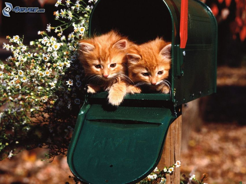 ginger kittens, mailbox, flowers