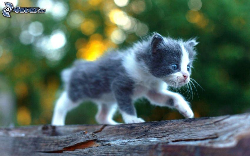 kitten, fence
