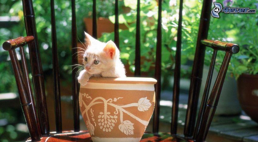 kitten, flowerpot