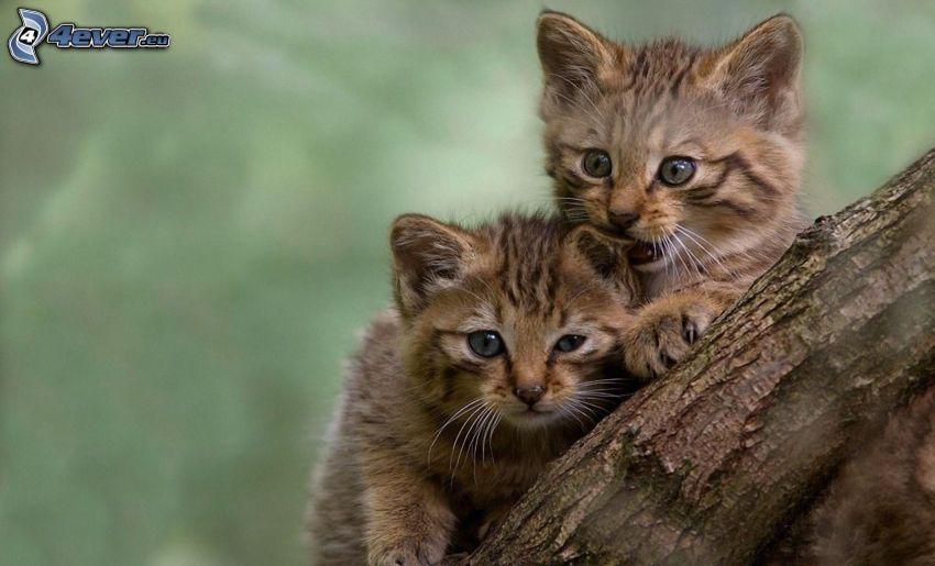 kittens, branch
