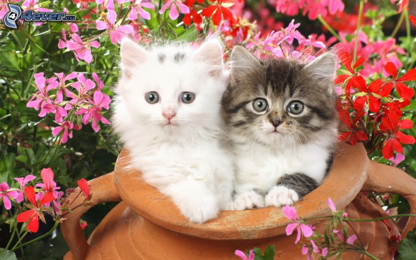 kittens, mug, flowers