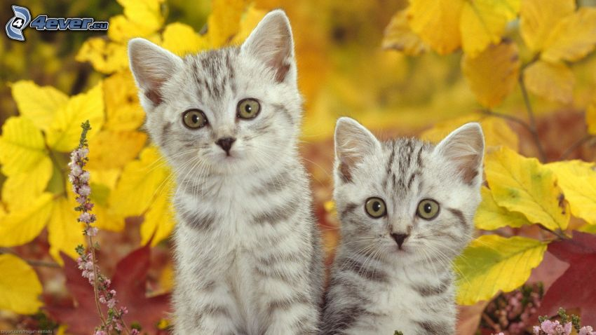 kittens, yellow leaves