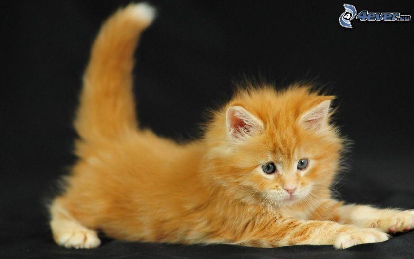 rusty kitten