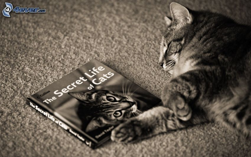 sleeping cat, book, black and white