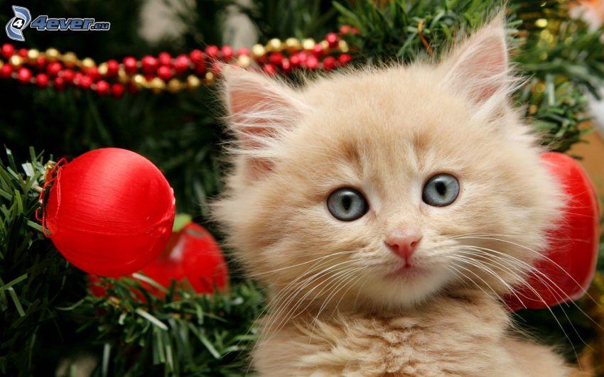 small ginger kitten, christmas tree
