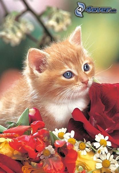 small ginger kitten, flowers