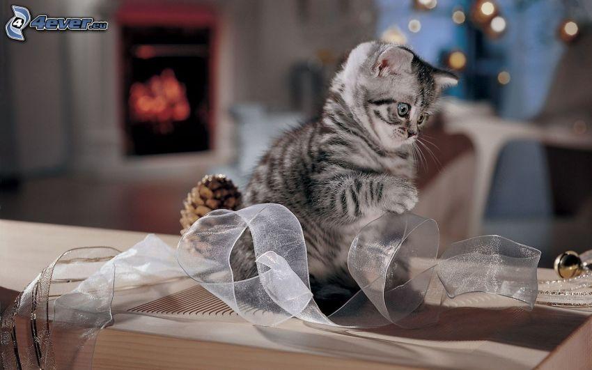 small gray kitten, ribbon