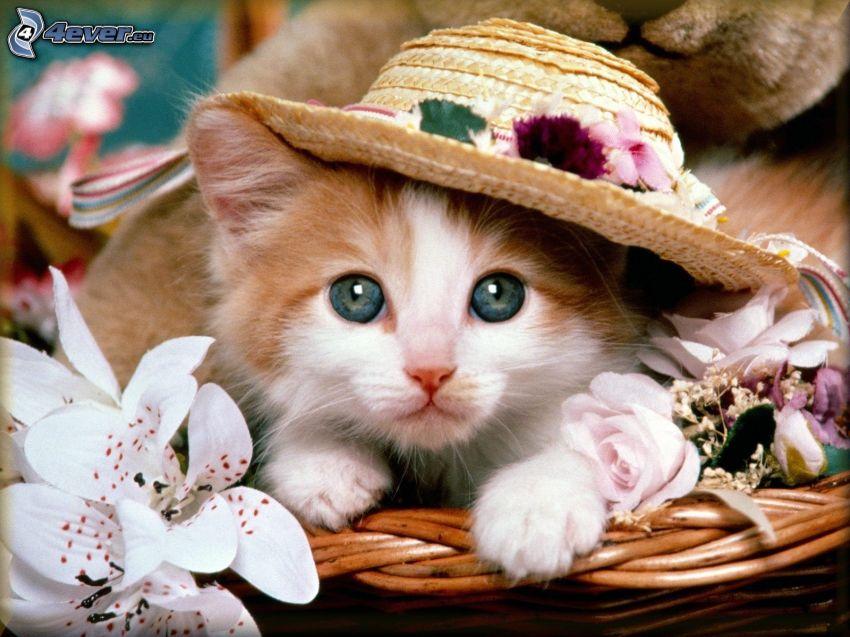 small kitten, green eyes, hat