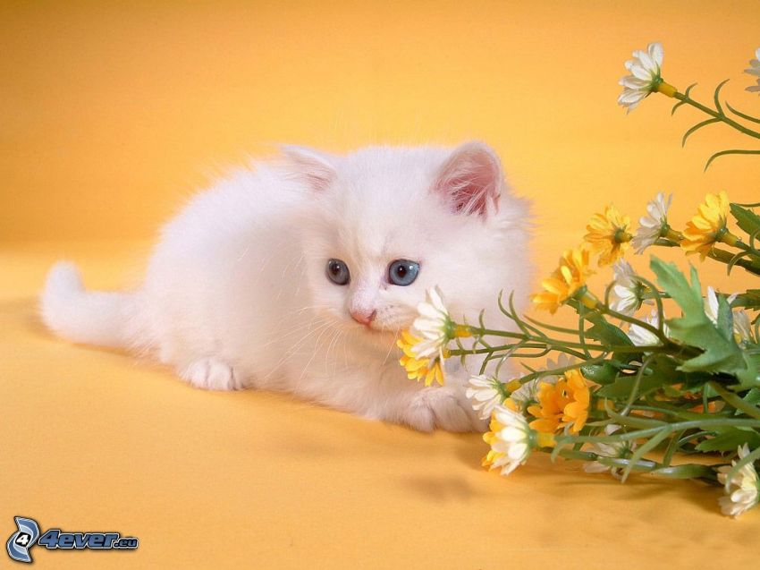 small white kitten, bouquets