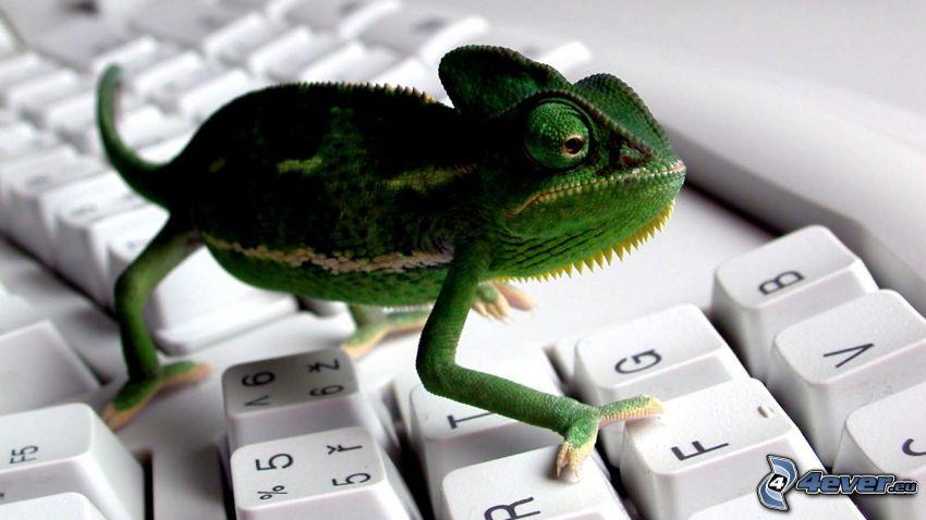 chameleon, keyboard