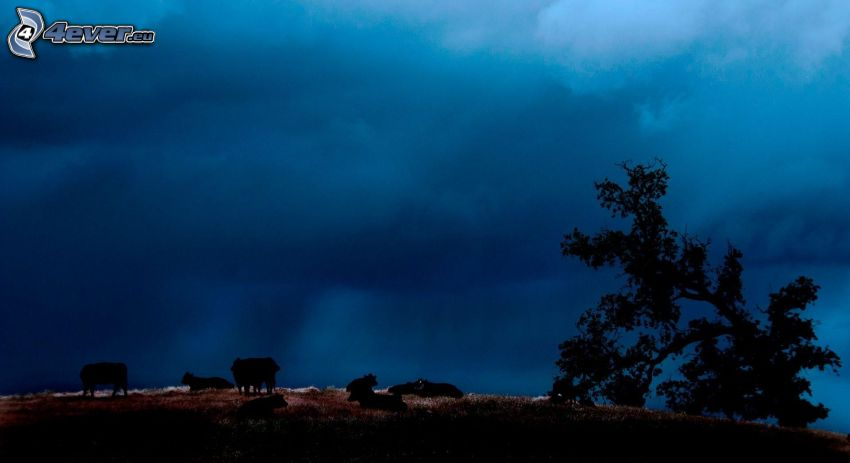 cow, silhouette, darkness, silhouette of tree, clouds