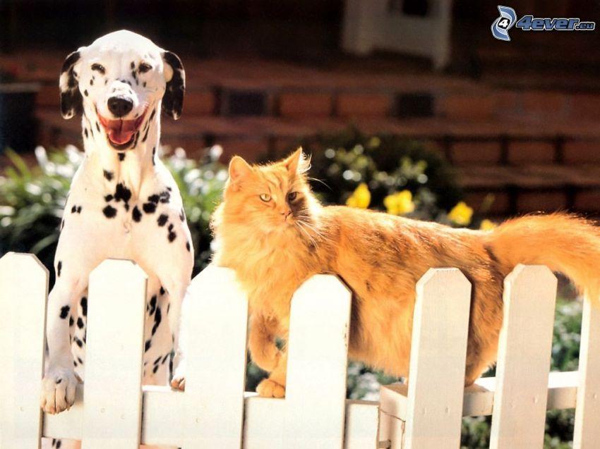 dalmatian, ginger cat, fence