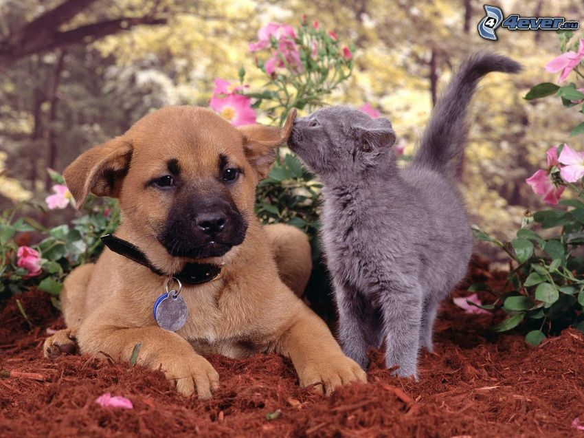 dog and cat, puppy