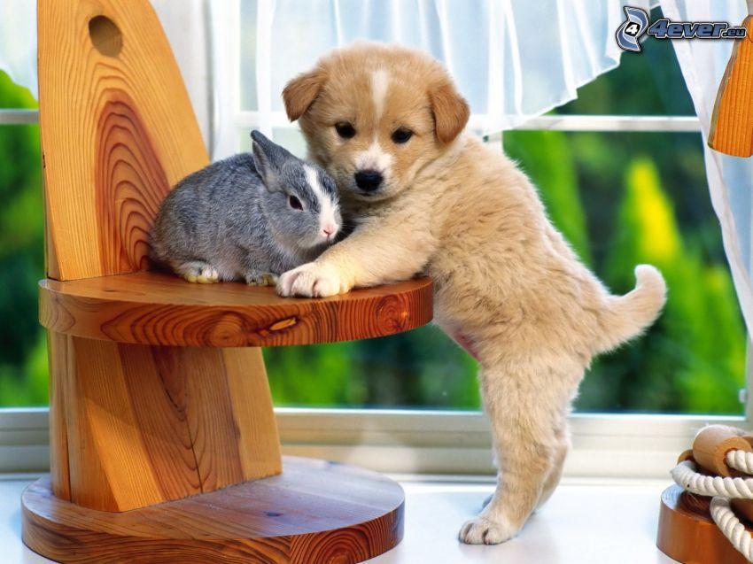 dog and rabbit, puppy, chair