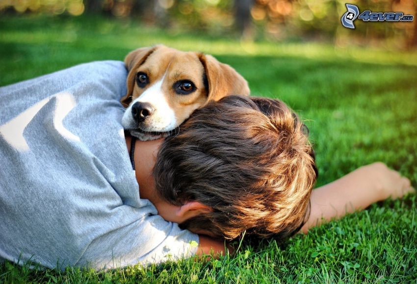 beagle, boy, rest, lawn