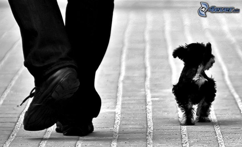 dog, legs, sidewalk, black and white photo