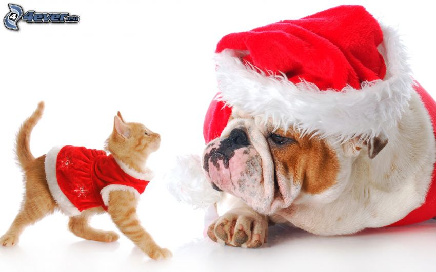 dog and cat, Santa Claus hat