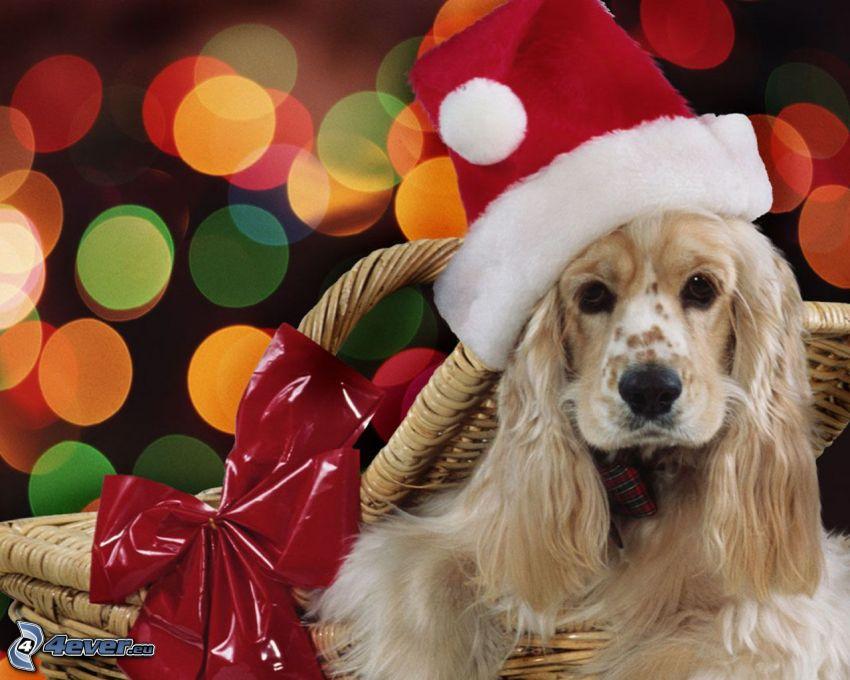 dog in basket, Santa Claus hat