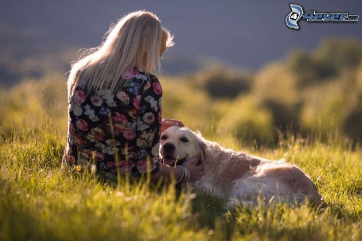 golden retriever, girl, meadow