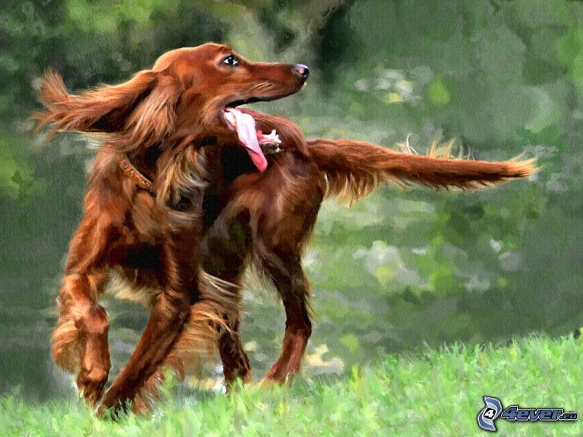 Irish Setter, put out the tongue, cartoon
