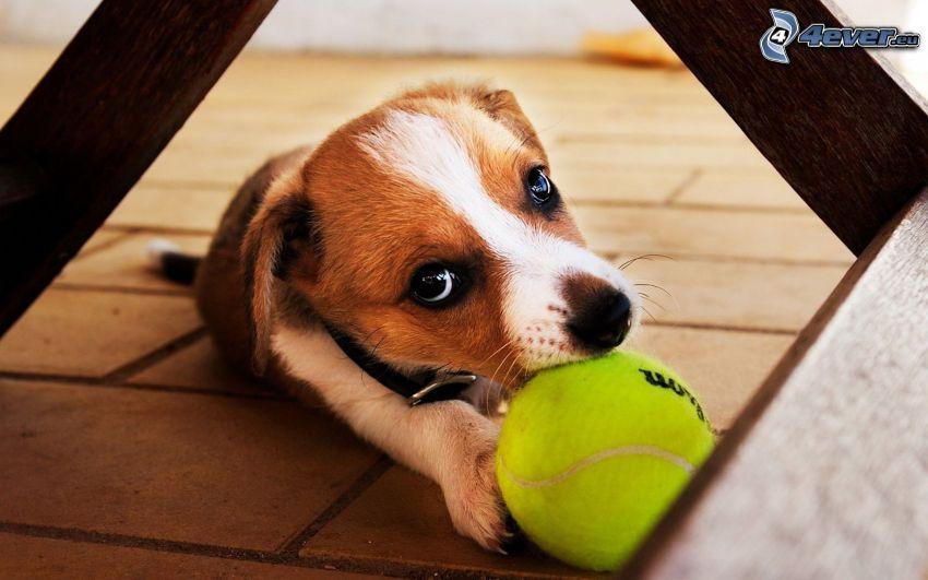 puppy, ball, pavement