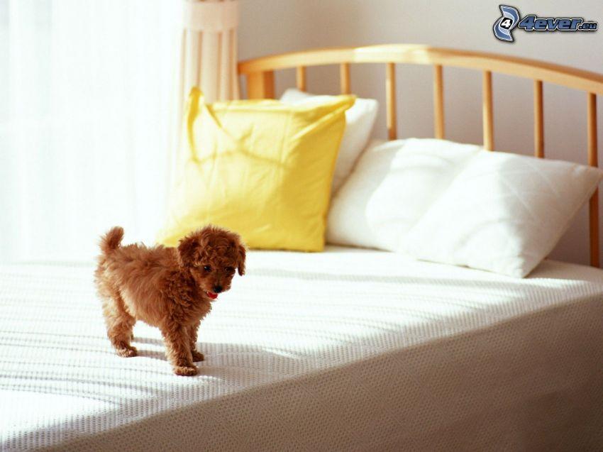 puppy, bed