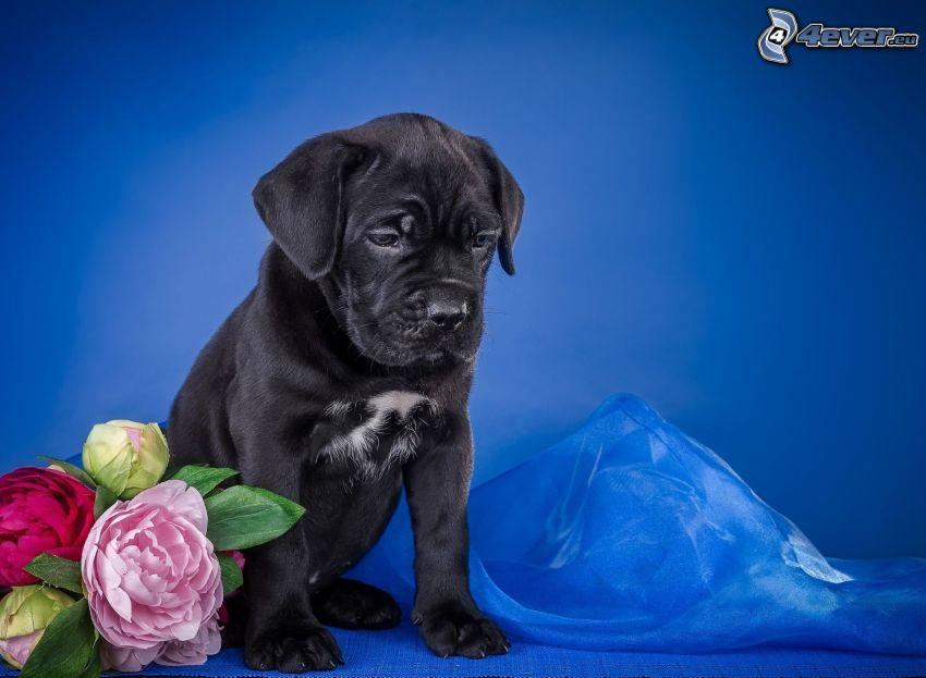 puppy, bouquets