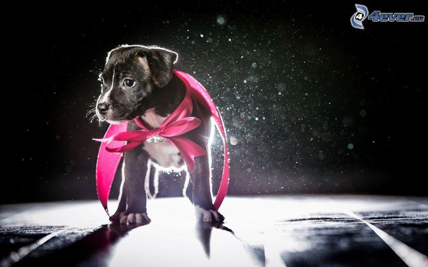 puppy, cloak