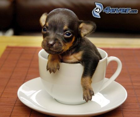 puppy, cup