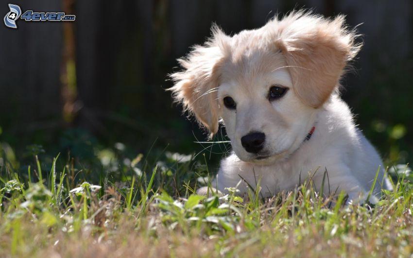 puppy, grass