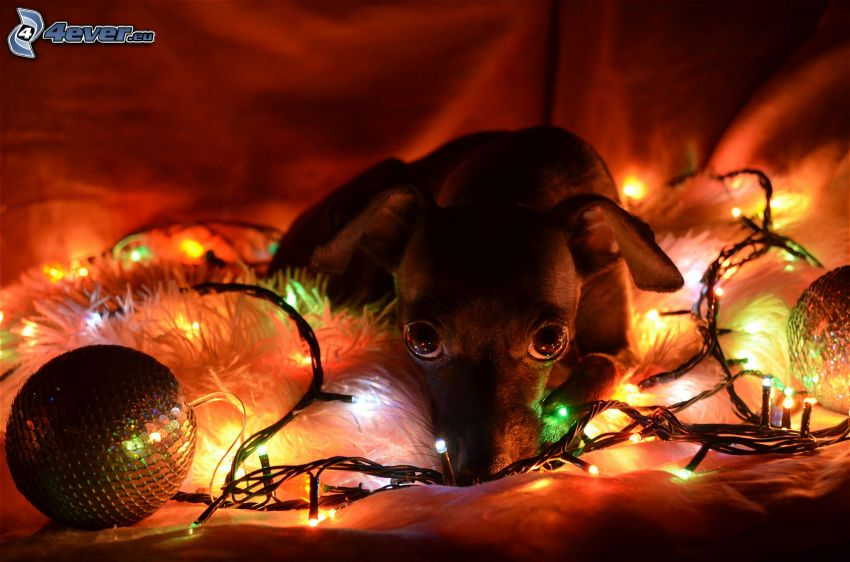puppy, lights