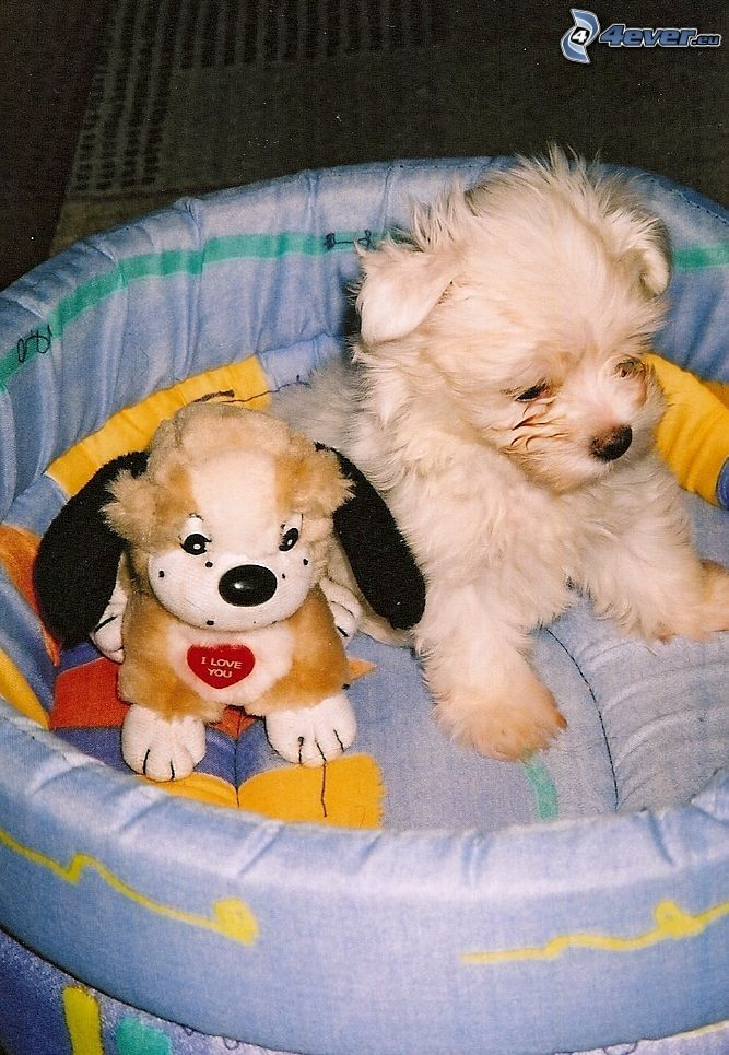 puppy, plush dog