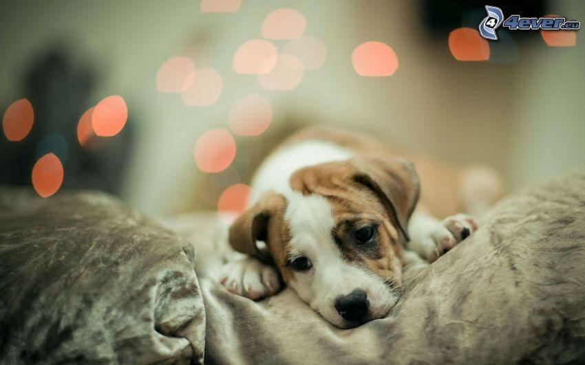 puppy, sadness