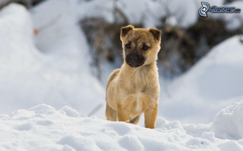 puppy, snow