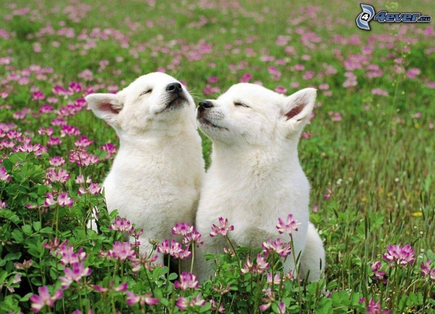 two dogs, puppies, purple flowers