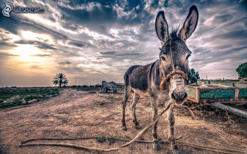 donkey, dark sky, HDR