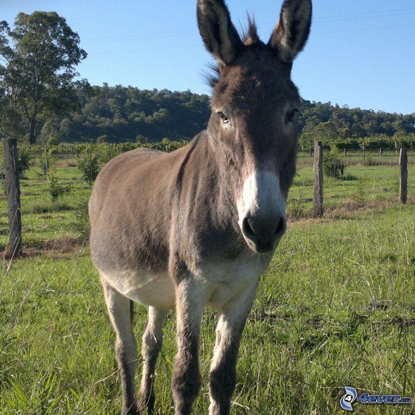 donkey, forest