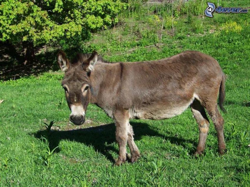 donkey, greenery