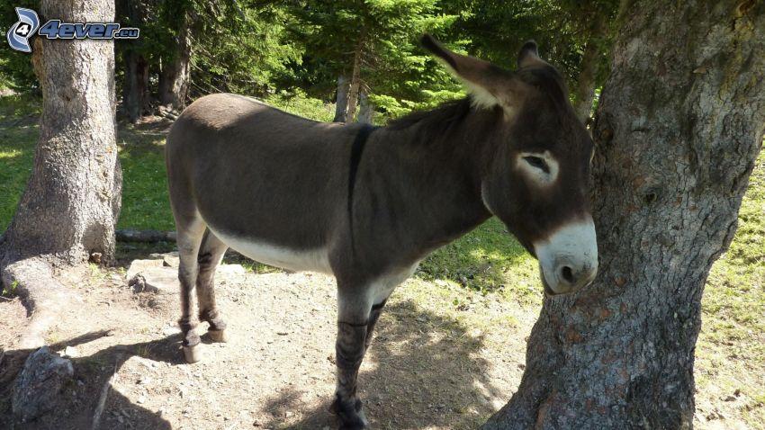 donkey, trees